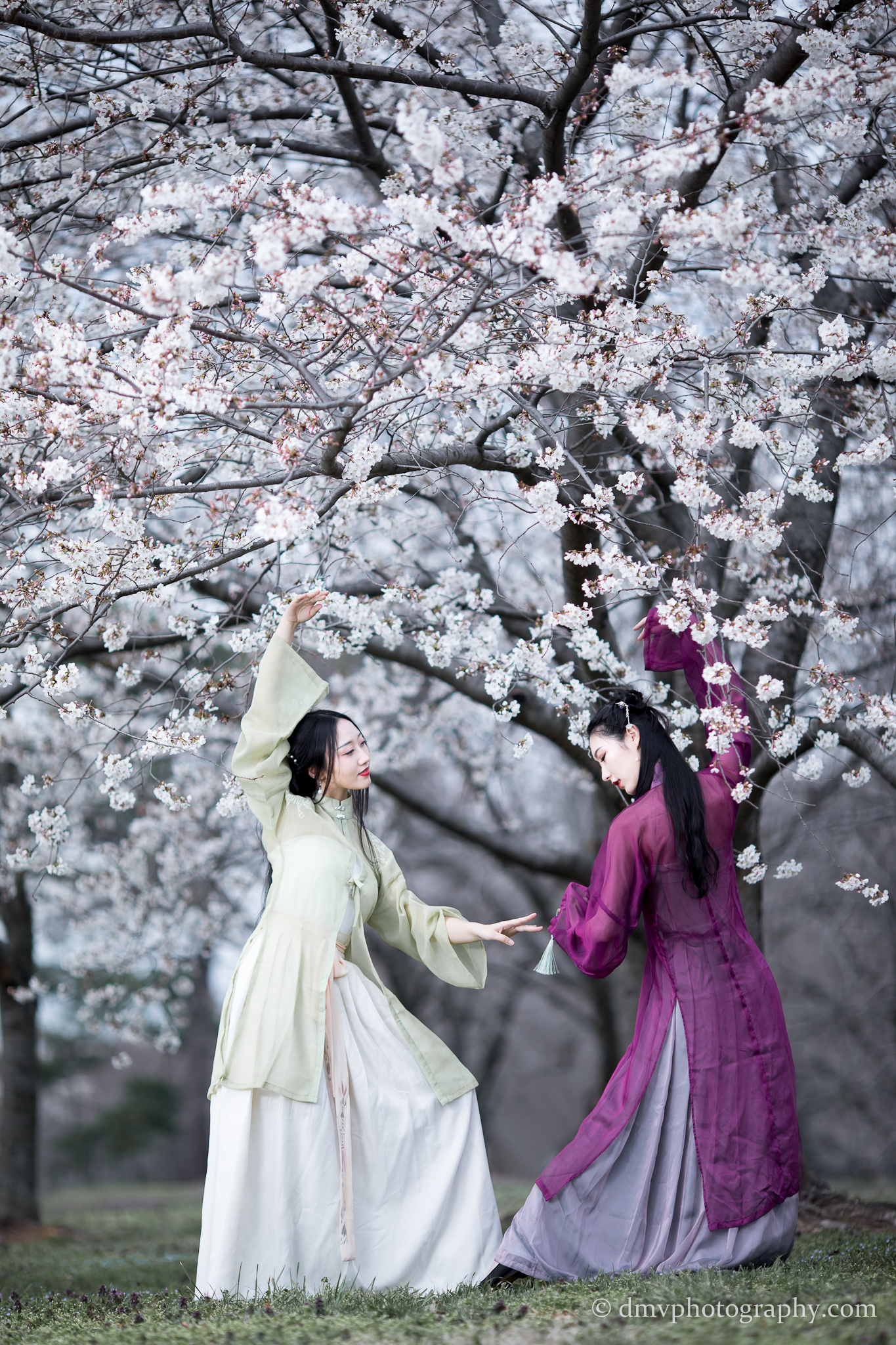 2017-03-25 - Day Cherry Blossom - 00076