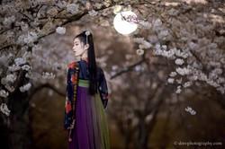 2017-03-27 Night Cherry Blossom - 00165