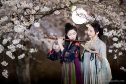 2017-03-27 Night Cherry Blossom - 00160