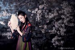 2017-03-27 Night Cherry Blossom - 00077