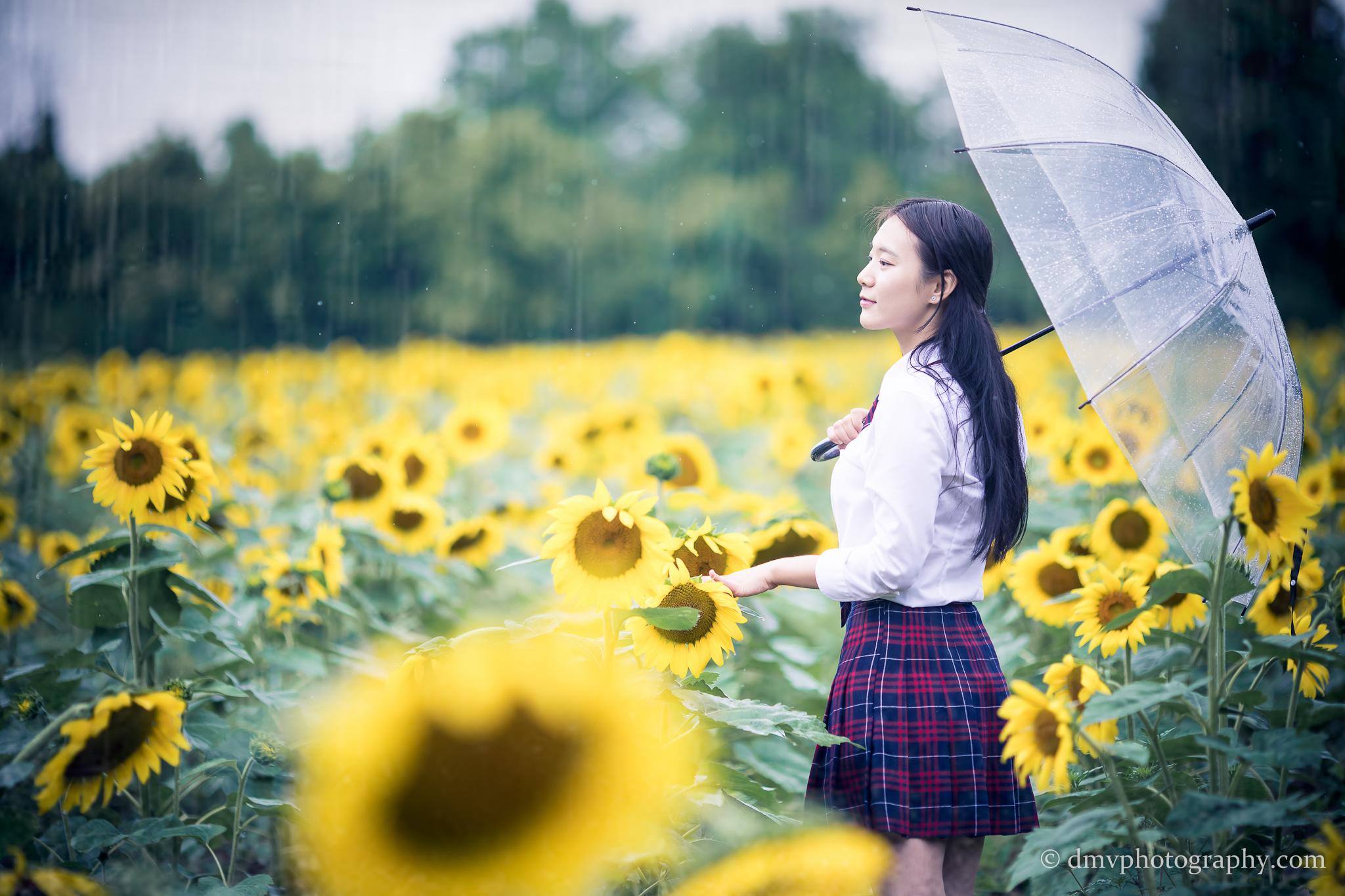 2017-07-29 - Yu Jie Sunflower - 00016