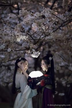 2017-03-27 Night Cherry Blossom - 00126
