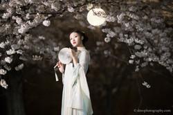 2017-03-27 Night Cherry Blossom - 00171