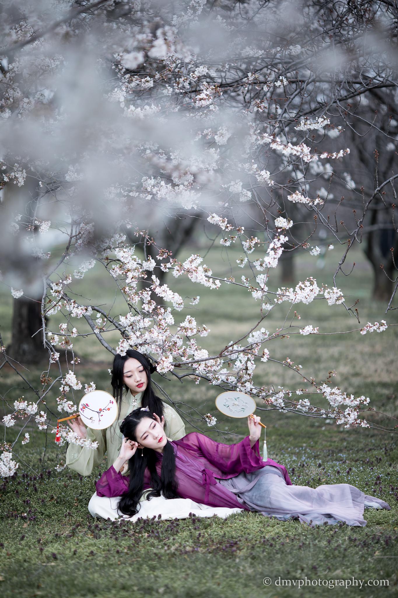 2017-03-25 - Day Cherry Blossom - 00143