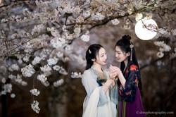 2017-03-27 Night Cherry Blossom - 00145