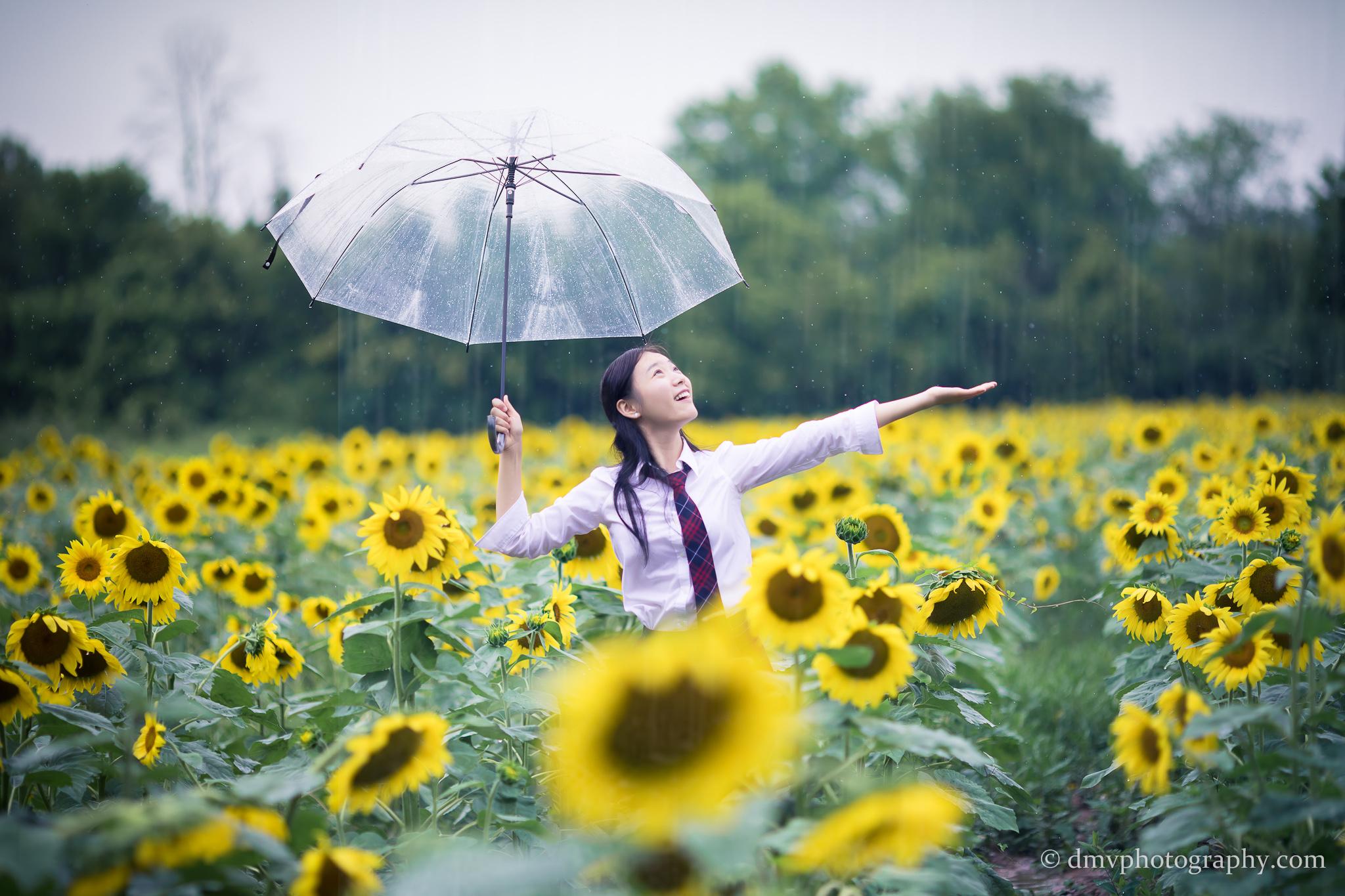 2017-07-29 - Yu Jie Sunflower - 00020
