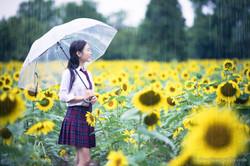 2017-07-29 - Yu Jie Sunflower - 00014