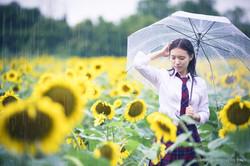 2017-07-29 - Yu Jie Sunflower - 00009