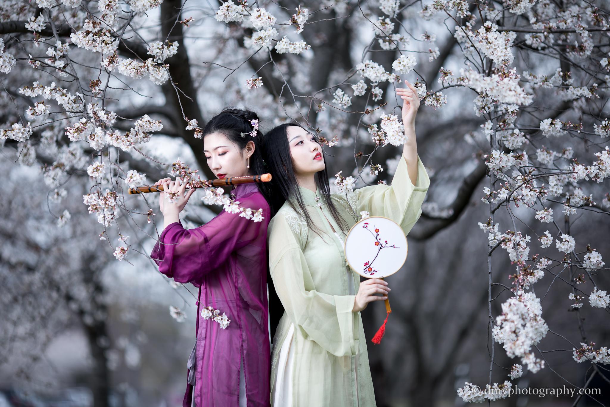 2017-03-25 - Day Cherry Blossom - 00112