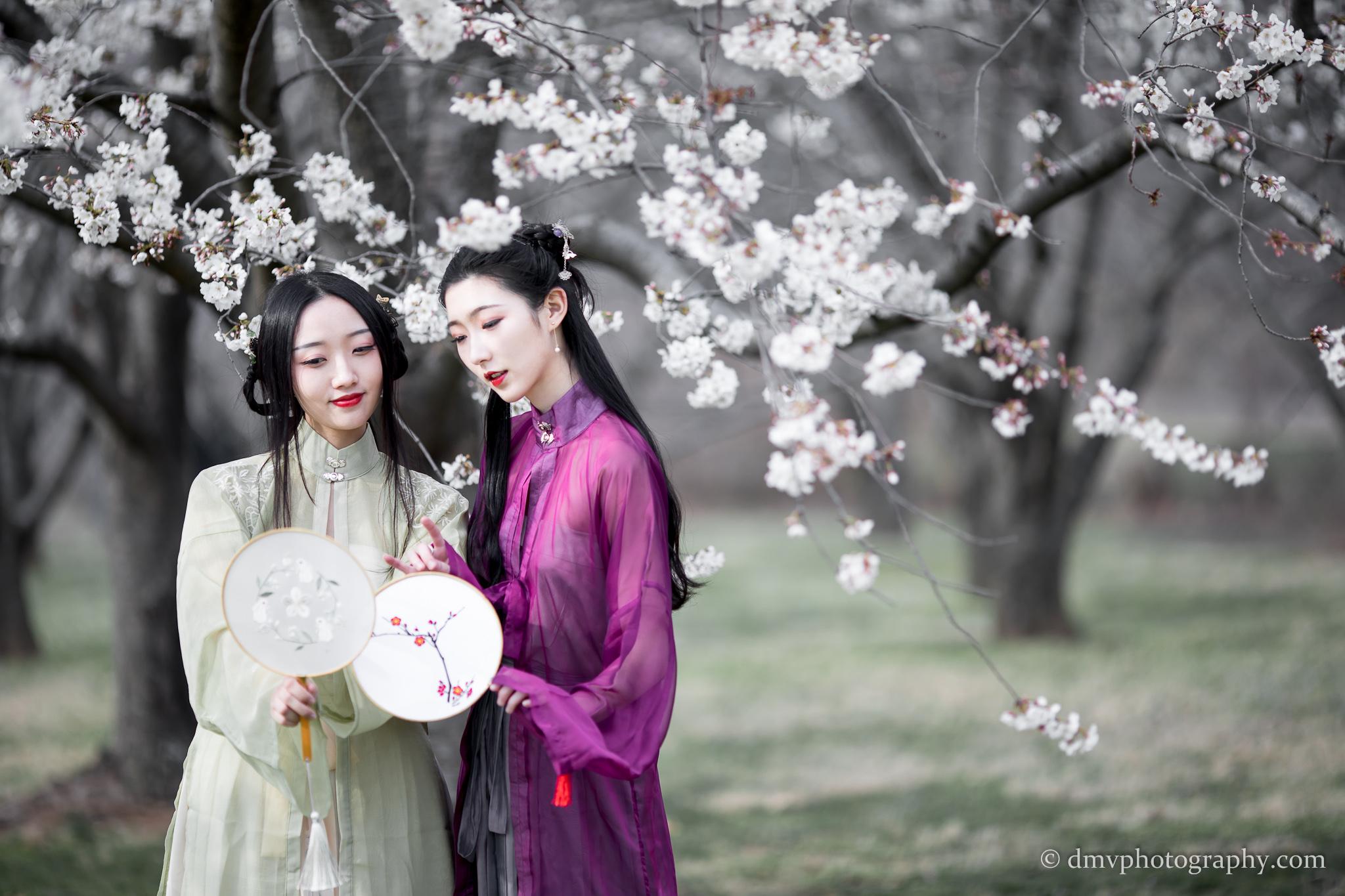2017-03-25 - Day Cherry Blossom - 00009