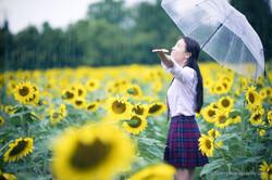 2017-07-29 - Yu Jie Sunflower - 00017