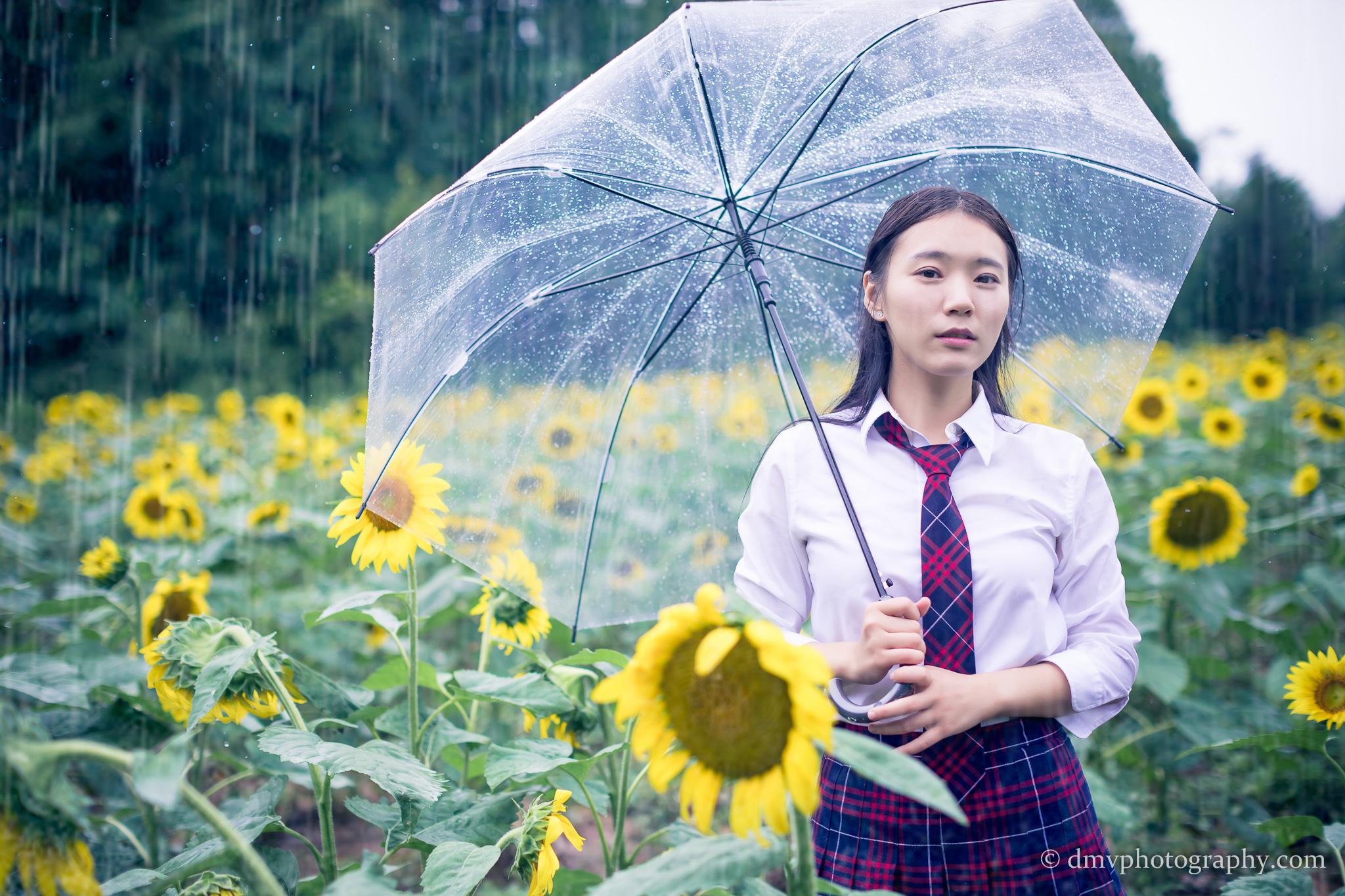 2017-07-29 - Yu Jie Sunflower - 00003