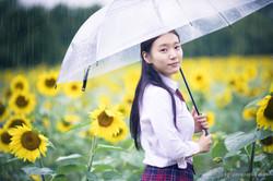 2017-07-29 - Yu Jie Sunflower - 00012