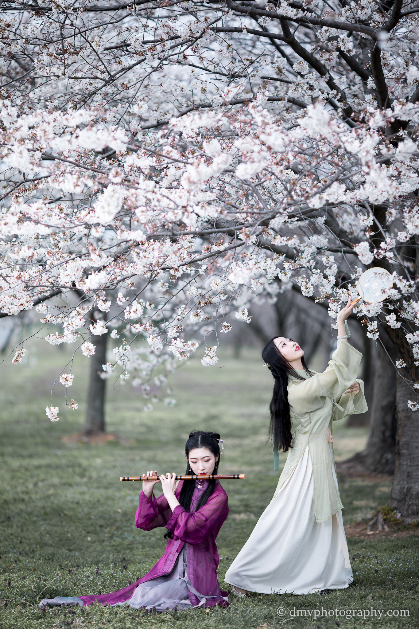 2017-03-25 - Day Cherry Blossom - 00030