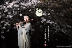 2017-03-27 Night Cherry Blossom - 00202v2