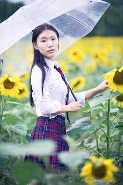 2017-07-29 - Yu Jie Sunflower - 00013