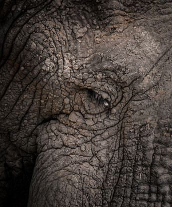 Textures of the Elephant Skin - Mark A F