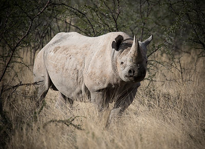 Namibia photo Expeditions