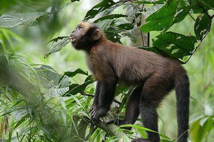 photo workshop, Amazon Rainforest