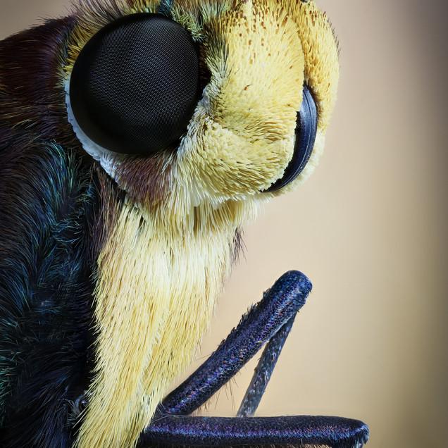 Moth Portrait