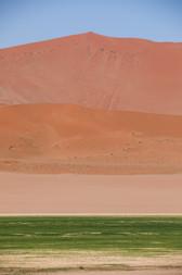 The Green Grass of Sossusvlei, Namibia