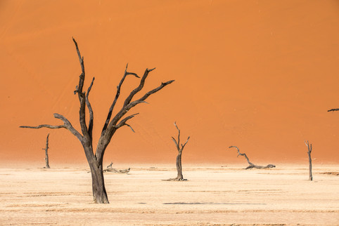 Trees of Deadvlei, Namibia