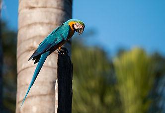 Amazon Rainforest photo tours