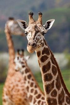 africa-african-animal-big-66280.jpeg