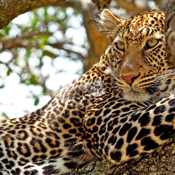 Signature Safari- Tanzania