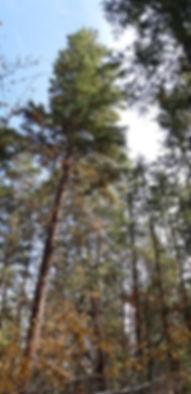 Woodhaven trees.jpg