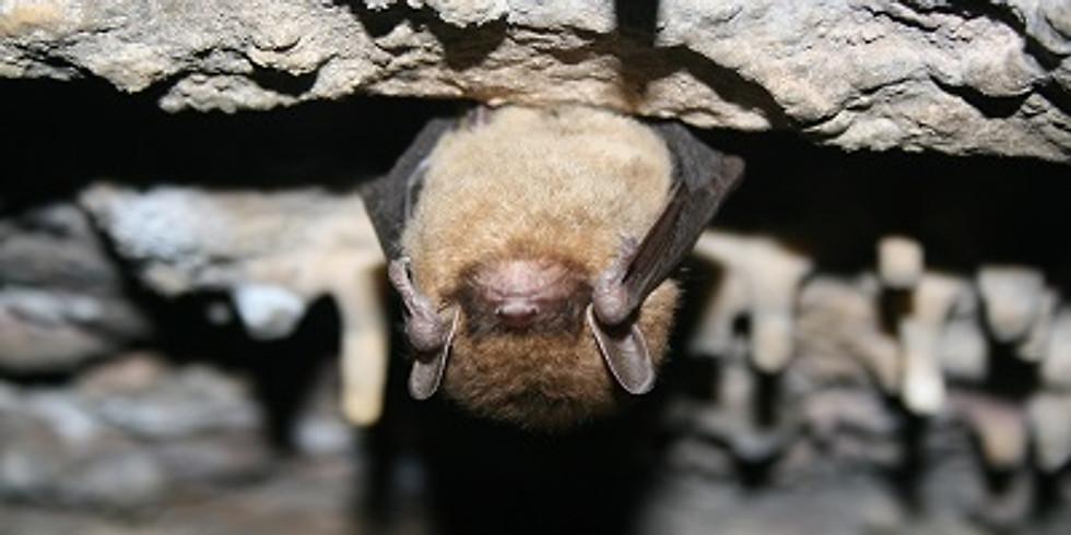 Bats of Woodhaven
