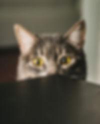 Little cat.jpg