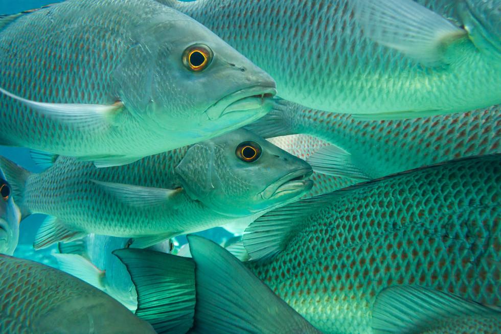 Carribean2014-4051.jpg