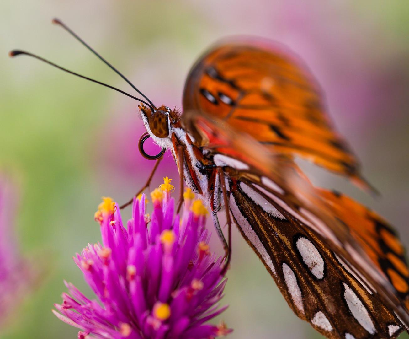 Pollinator at Work