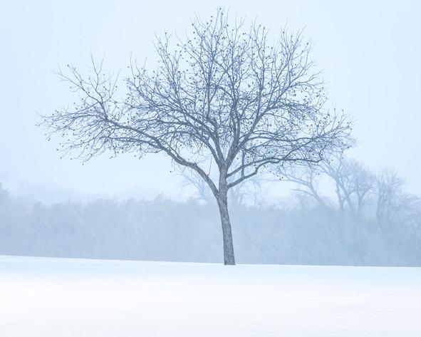 20210214_Snow_121-Edit.jpg