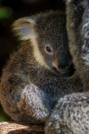 20090830-Australia-135.jpg