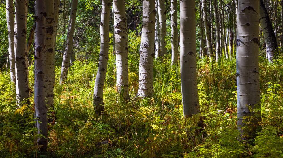 20210909_Colorado_3033.jpg