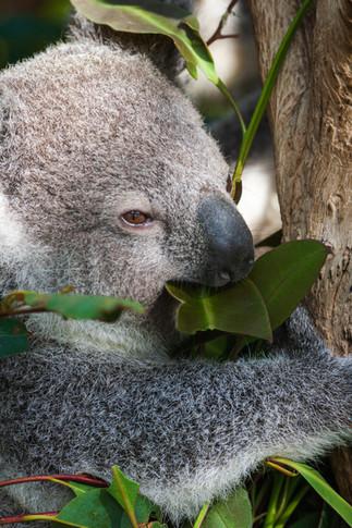 20090830-Australia-117.jpg