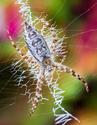 20200621_Spider_113-Edit.jpg