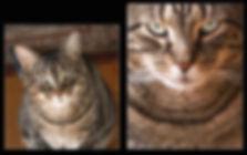 """A Matter of Perspective"" photographs of a cat by Ken Schuster."