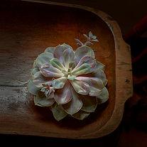 Succulent - Photograph by Ken Schuster.