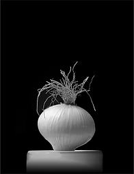 Monochrome image by Ken Schuster