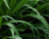 """""""Morning Grass"""" haiku and photograph by Ken Schuster."""
