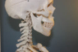skull-778075_960_720.jpg