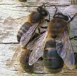 our bees they live on our land well situated for them amd to live between the vegetation at stazzu la capretta