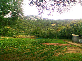 our 3500m2 organic garden with a lot of vegetables for our own consume but also to sell at our guests in stazzu la capretta