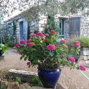 terrace Olivastro room