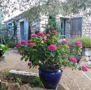 Olivastro room terrace