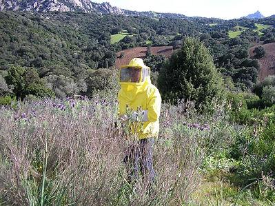 La production du miel au stazzu la capretta