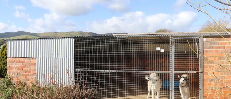 Large Kennel OUTSIDE.JPG